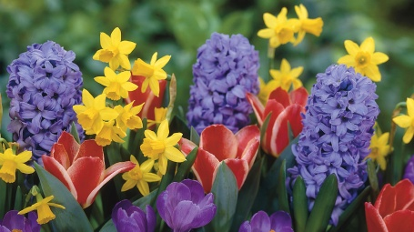 daffodils-tulips-crocus-hyacinth-flowers-wallsank-flowers-photo-daffodil-flower-hd-wallpaper